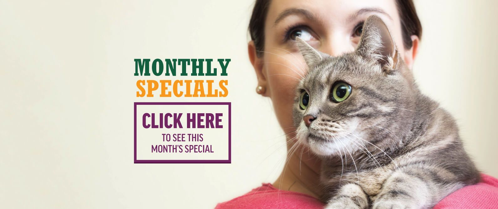 Circle L Animal Hospital Monthly Special