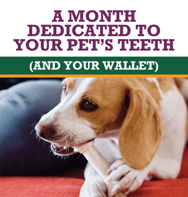A Month Dedicated to Your Pet's Teeth (and Your Wallet)