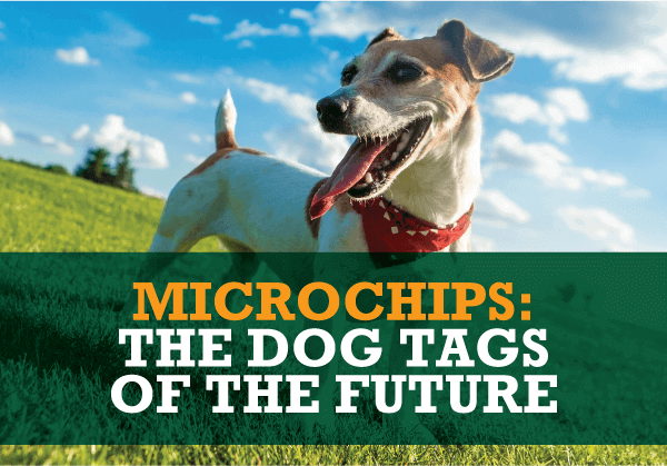 Microchips: the Dog Tags of the Future
